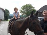 Pferd Bruno